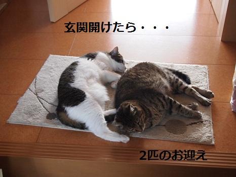 2分でご飯じゃないの?.jpg