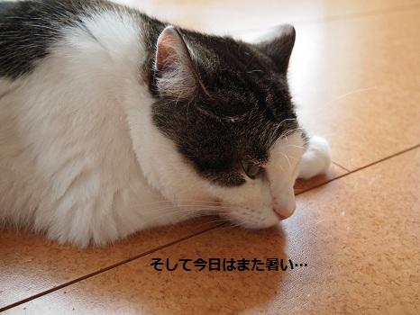 また暑い~.jpg