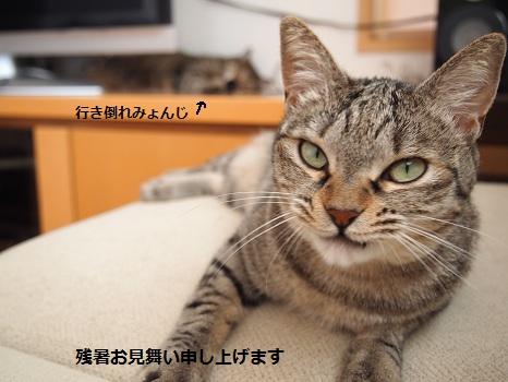残暑ざんしょ.jpg