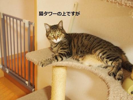 猫タワー2段目.jpg